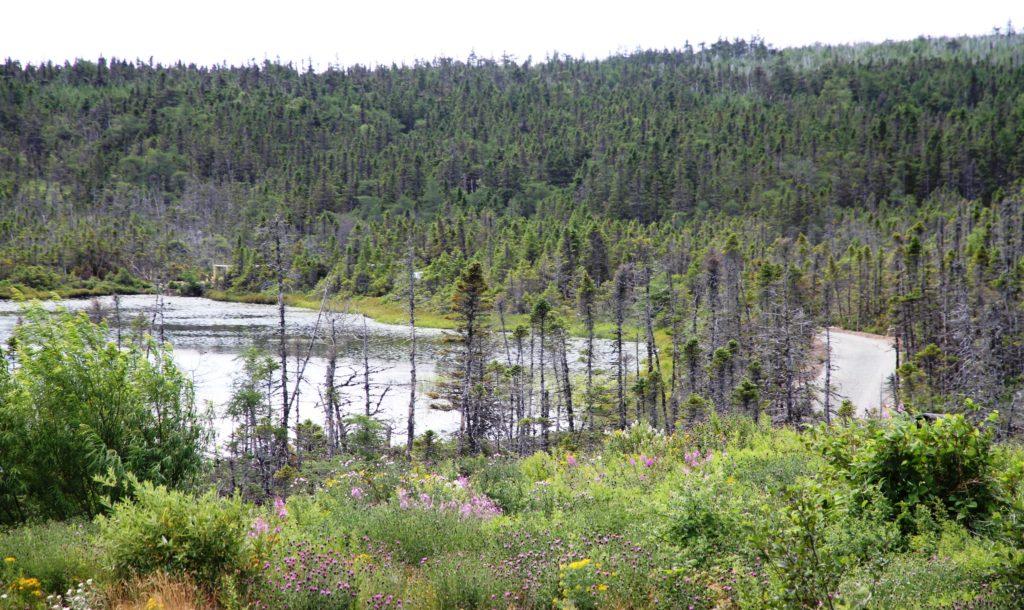 Upper Three Corner Pond