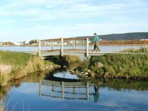 Mundy Pond Walk